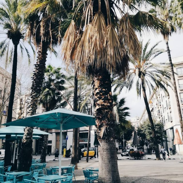 shades of bcn  never enough palm trees